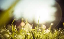 语录:每一次生命的轮回都是一个花开花